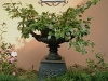 residential garden, small courtyard 1 of 2