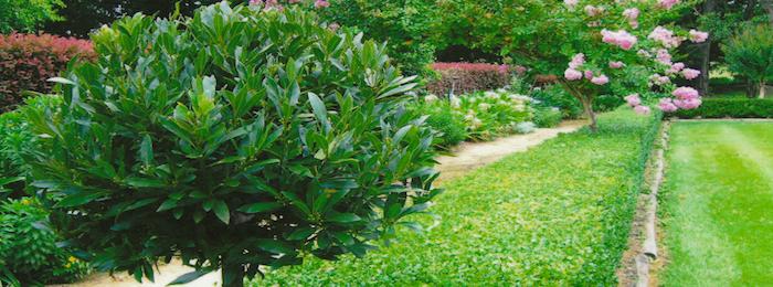 4-EC-garden-lores-home-page-700x260